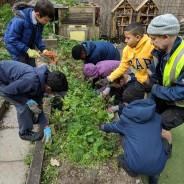 Eco Day – Renewable Energy – Science Garden